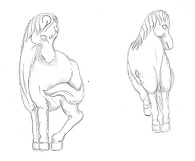 HorseTail.jpg