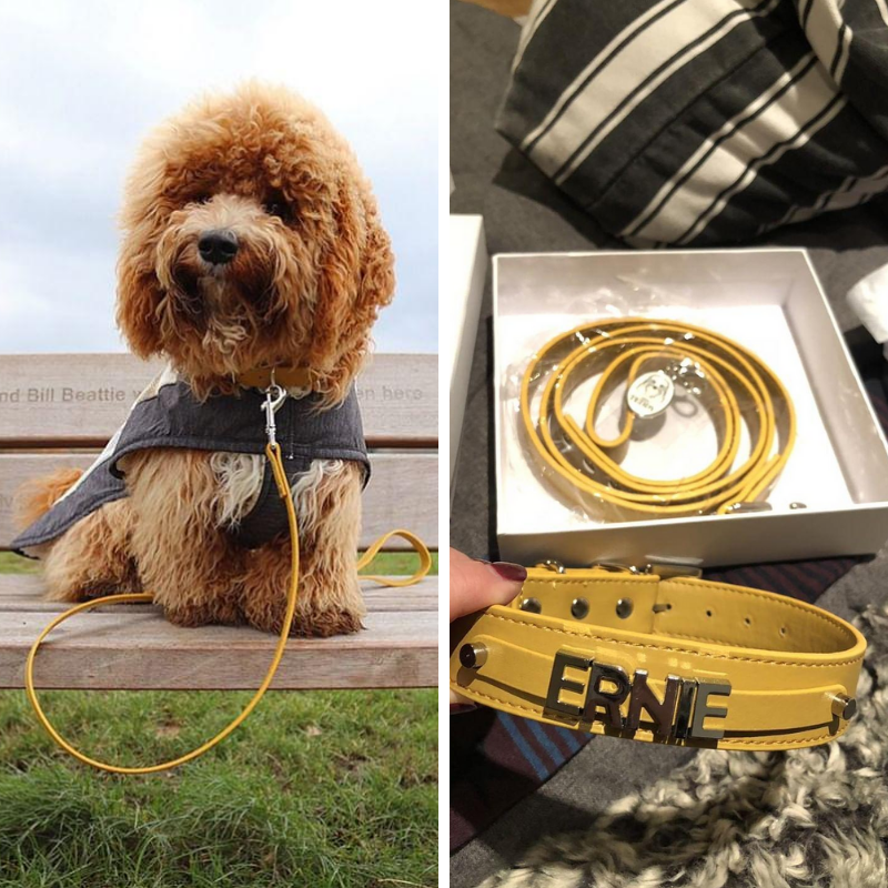 Ernie Oodle - We absolutely love our Miss Teddy collar & lead sets! They are so stylish and excellent quality. We always get lots of compliments when he's wearing them and people asking where they are from. Can't recommend them enough!