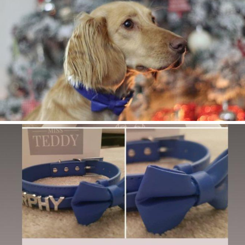 Murphy the Magnificent - Personalised leather collars, bows and leads