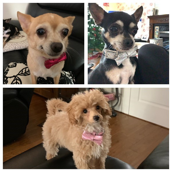 Primrose, Tequila & Betty - I think the collars are beautiful and your service has been amazing and friendly, I highly recommend your services 😊