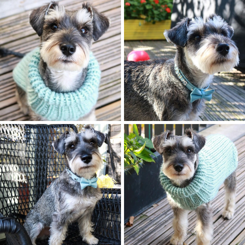 Louis the Mini Schnauzer - I own a jumper and a collar and lead from Miss Teddy and super happy with both. One of the best selections of colours and styles I have seen at any pet store and top quality products! Very helpful when contacted to ask about sizing and all in all great customer experience and service. I would definitely use again and of course recommend.
