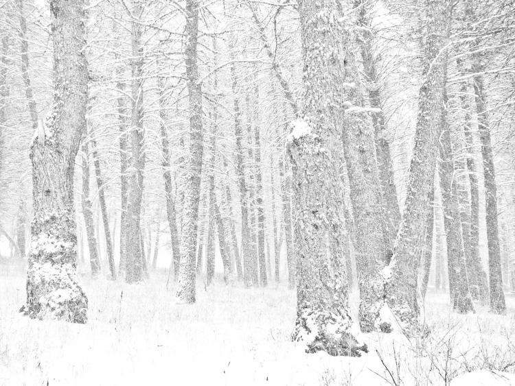 20091007213847_snow-trees.jpg