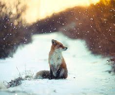 fox7.jpg