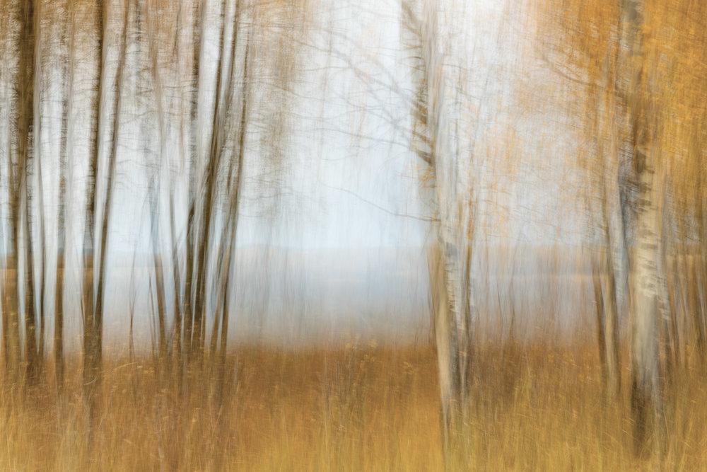 Meadow Panning.jpg