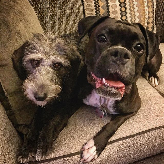 Look at these muppets. They are so in love, it's disturbing. #lesbiandogs #loverdogs