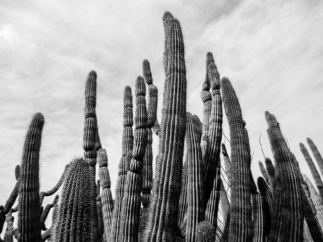 I went to Arizona once. I feel in love with a cactus. #sexysucculents #arizonasonoradesertmuseum