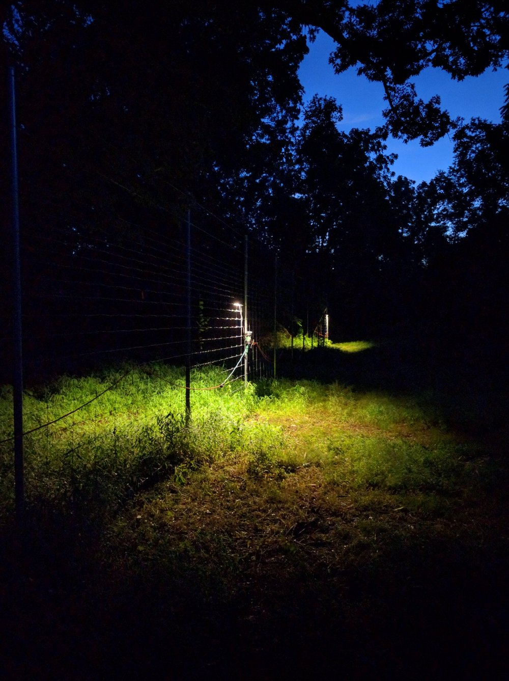 A look at two of my light sources for my investigation on the impact of light pollution. Underneath the lights are transects of pitfall traps.