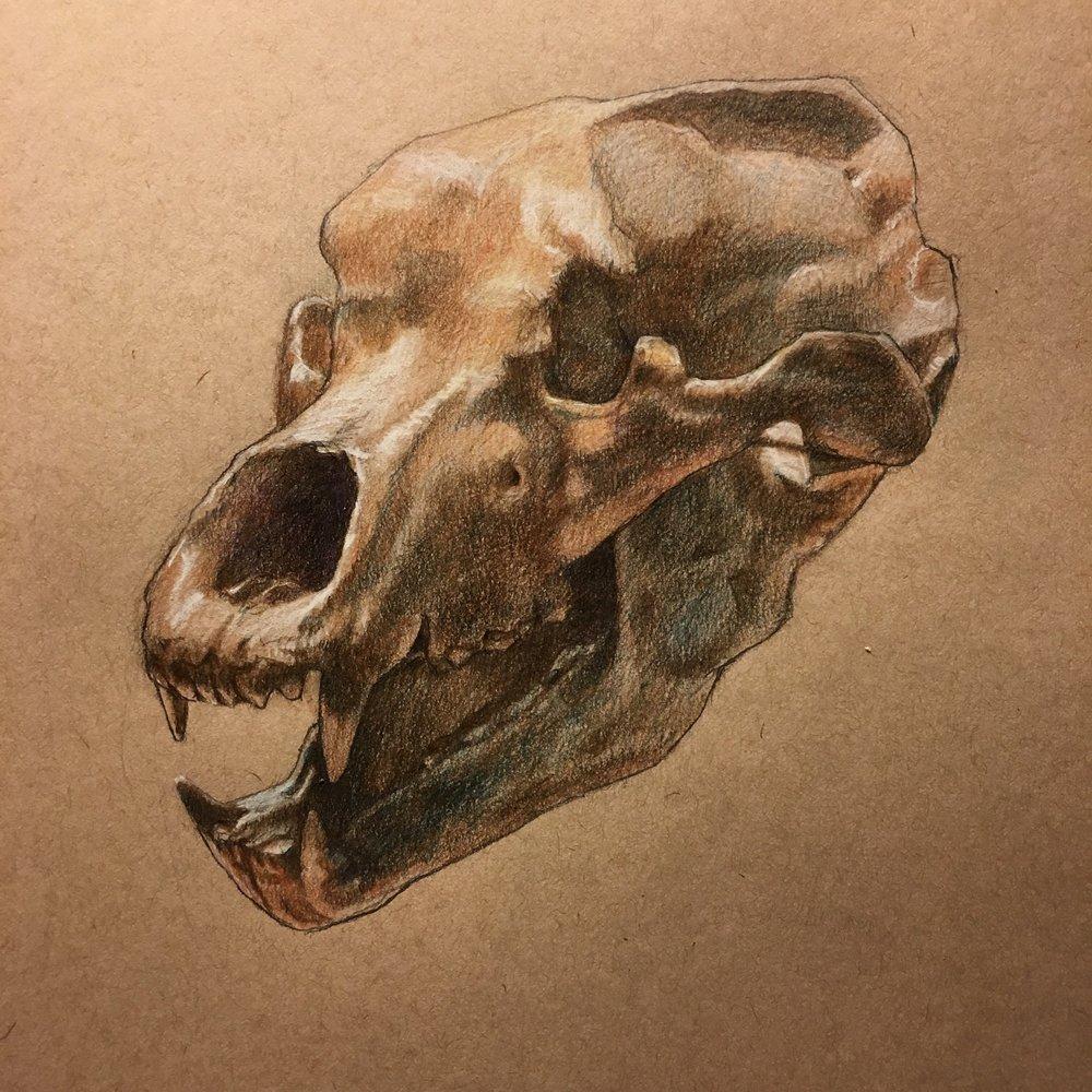 Benesky Bear Skull