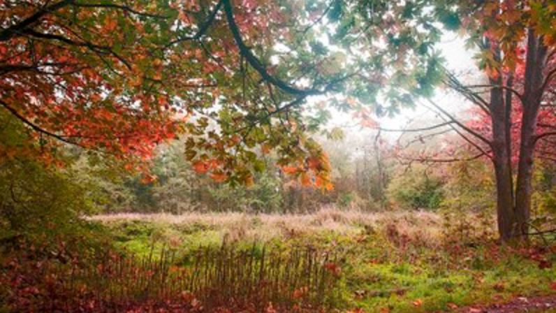 Image: City of Surrey archives, Redwood Park