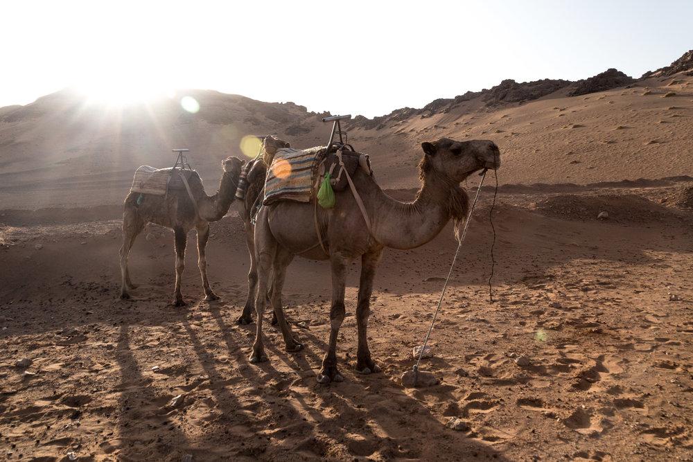 20170621_ebb_morocco_01_418.jpg
