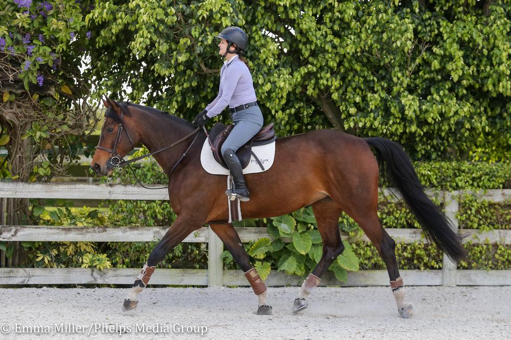 Pony Lane Farm, Tosca-2.jpg