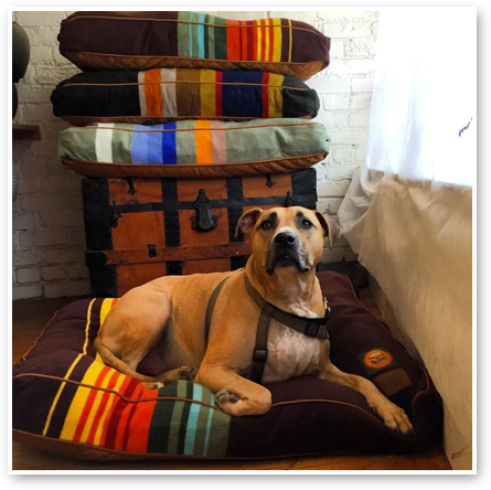 Dogville has tons of high quality products for your dog including these awesome Pendelton dog beds