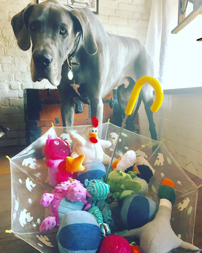 Giant Great Dane with adorable toys from Dogville San Anselmo.jpg