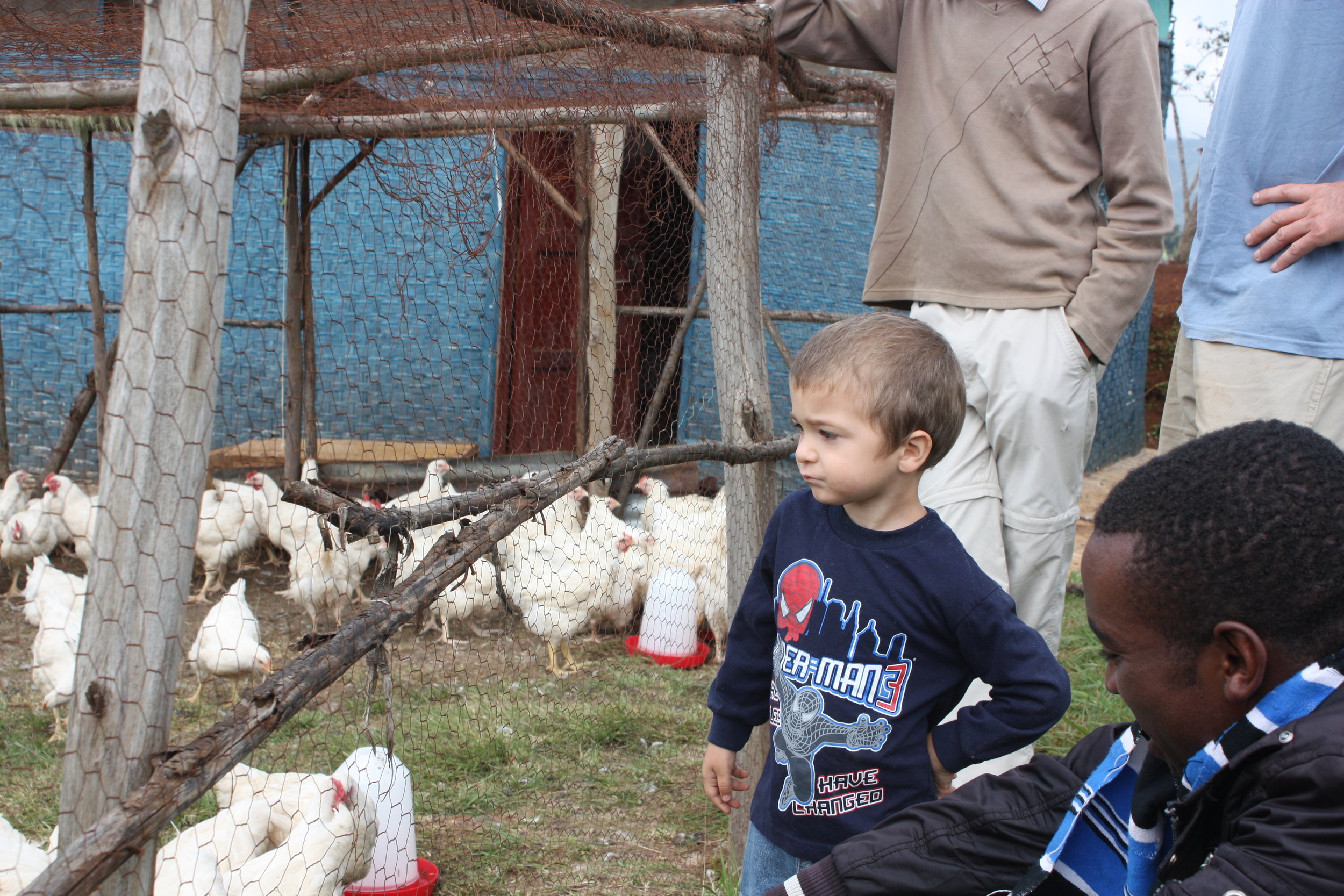 Dawit checking on the chickens