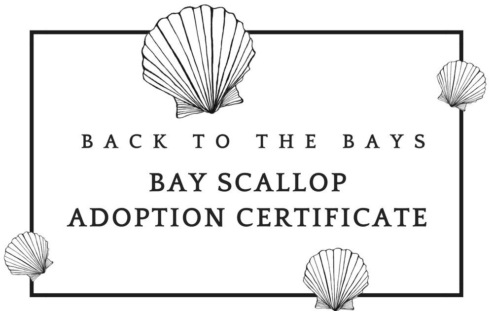 B2B Bay Scallop Adoption-front-fixed.jpg