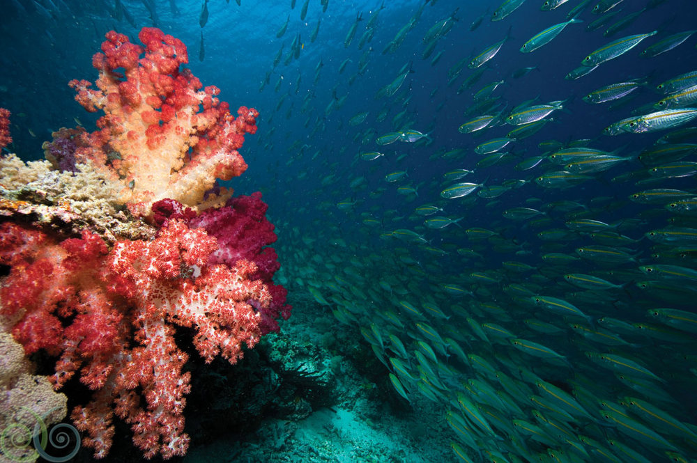 MER.Tobias.Zimmer.House.Reef.1.HR.jpg