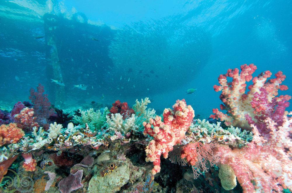 MER.Danielle.Heinrichs.House.Reef.HR.jpg
