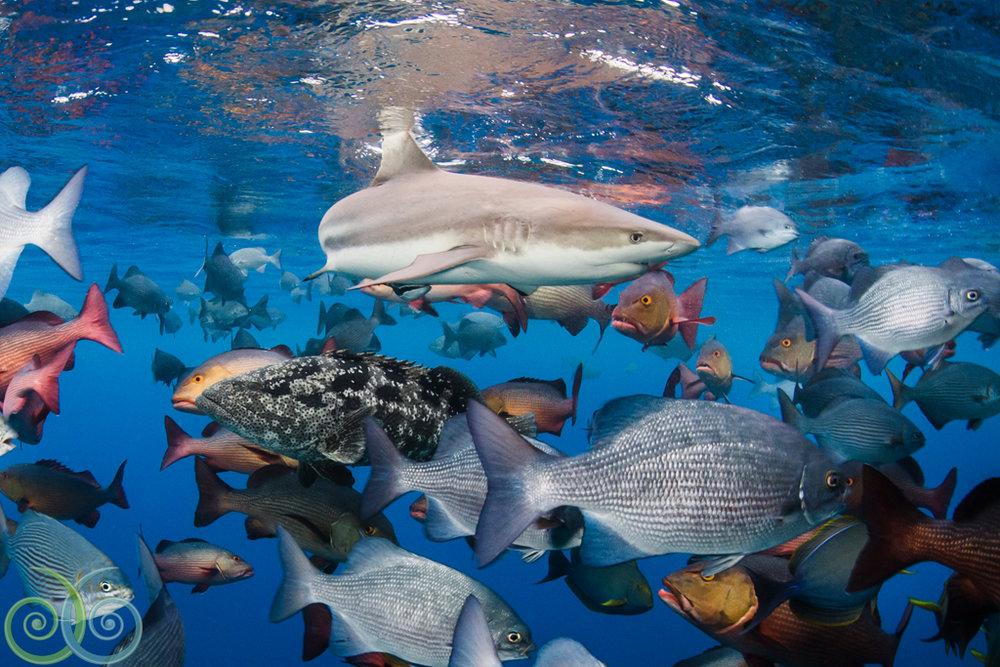 Misool.house.reef.snorkeling.jpg