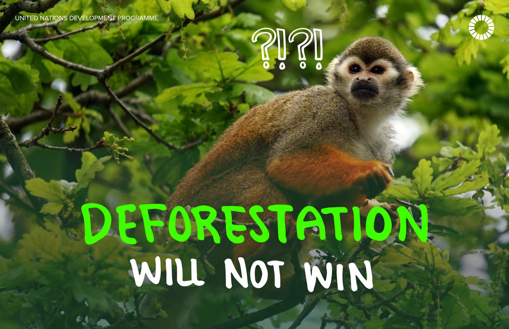 10. Deforestation.jpg