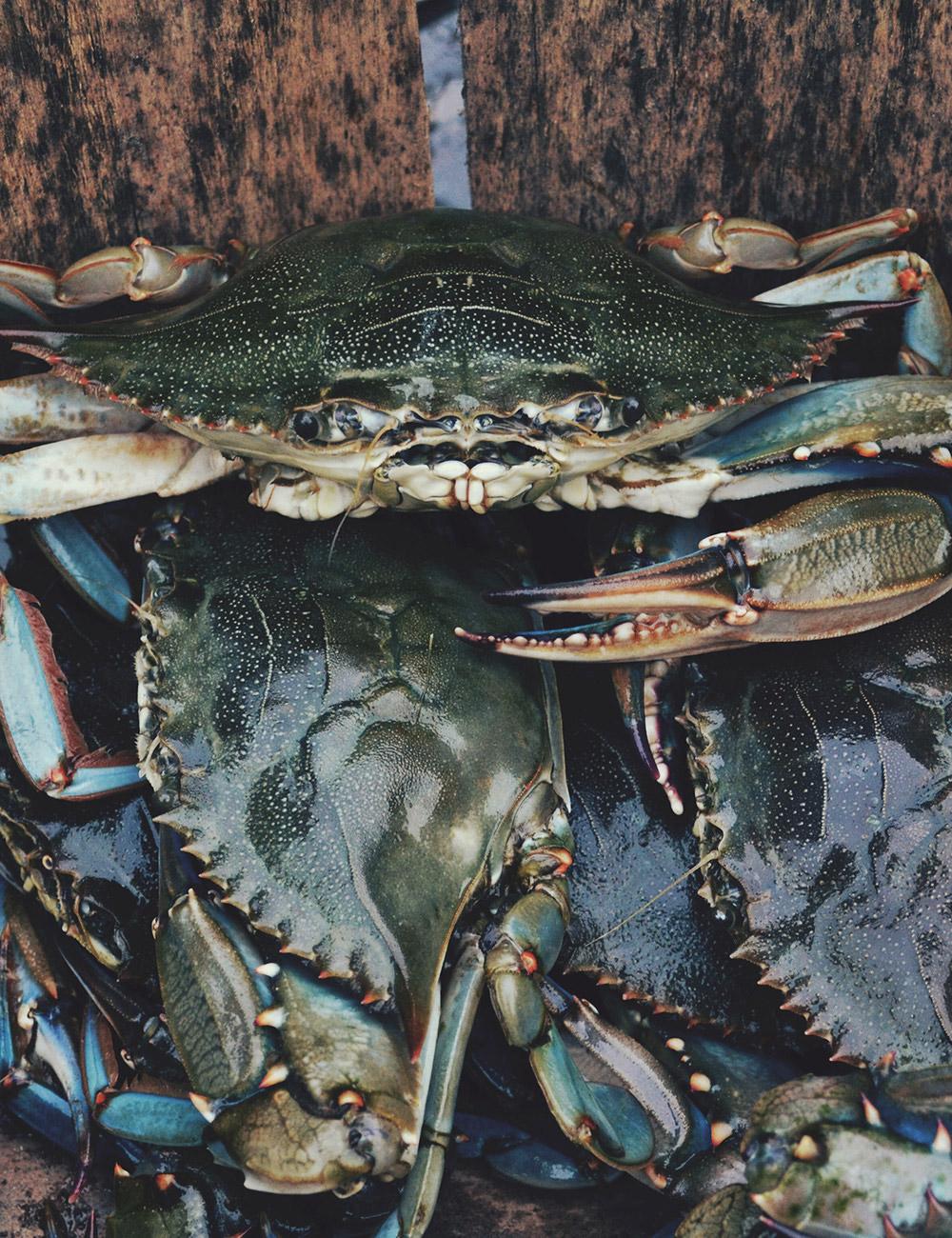 crabs-tall.jpg