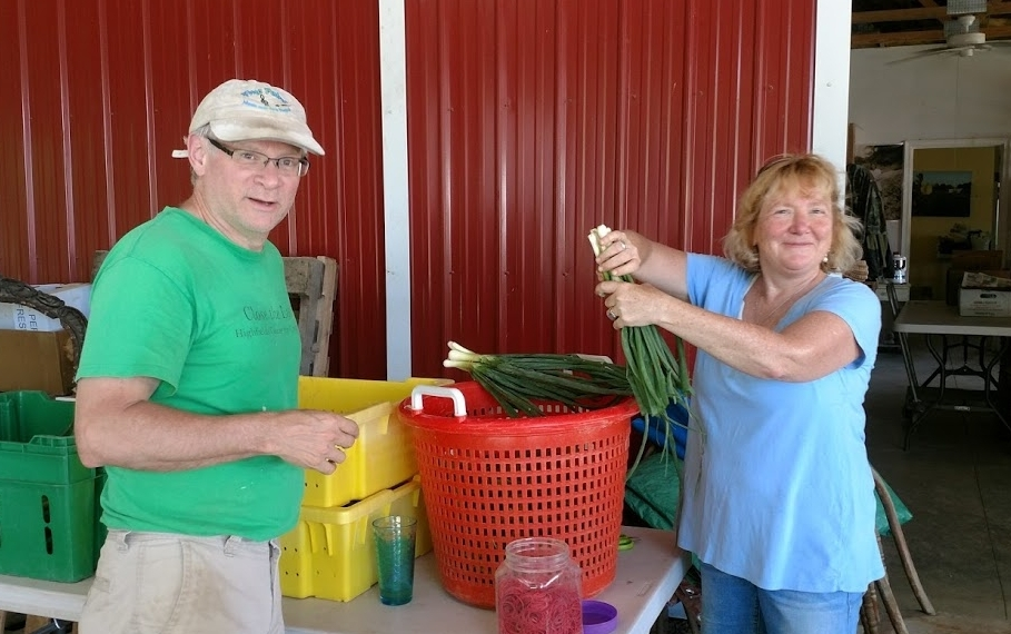 Dave & Sarah came down from Vermont to help us bunch spring onions!