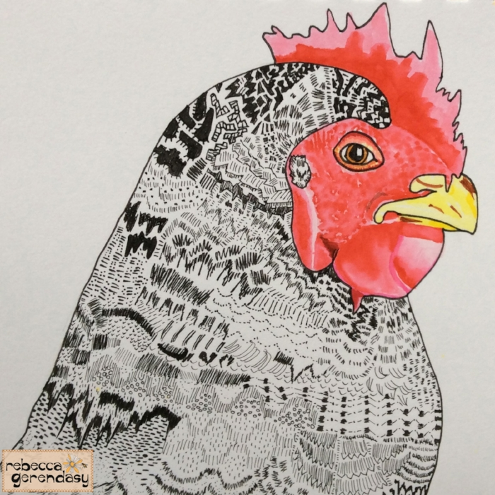 Barred-Rock-Chicken_Rebecca-Gerendasy
