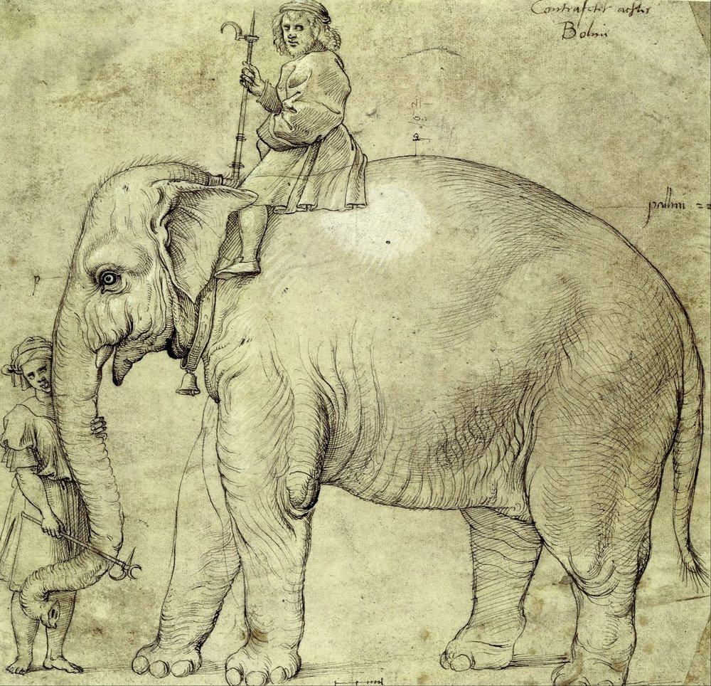 Raffaello_Sanzio_(school_of)_-_The_Elephant_Hanno_-_Google_Art_Project.jpg