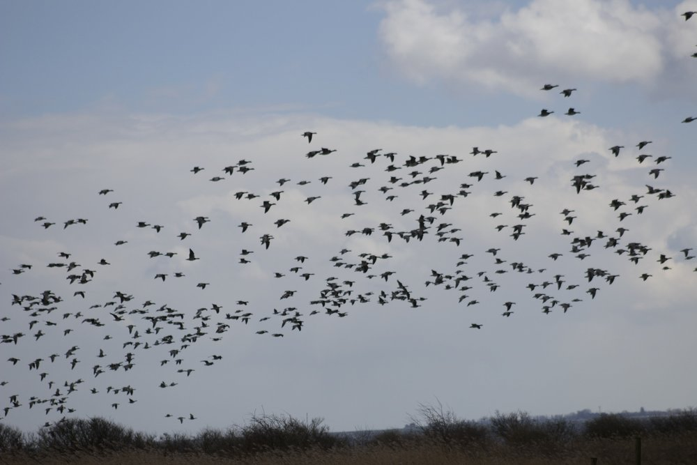 fugle over vejrø resort.jpg