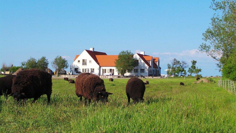 Bæredygtighed og økologi er grundstenen på Vejrø Resort