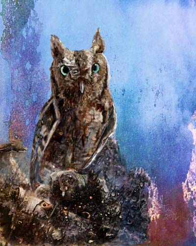 Ray Martin - Screech Owl08.jpg
