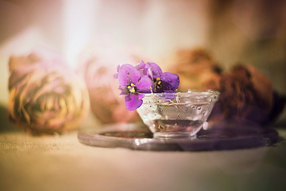 flower-3083448_1920.jpg