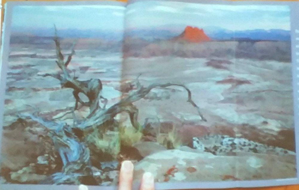 Inspiration for landscape