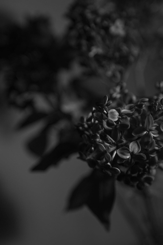 Black Lilac 9, 2017