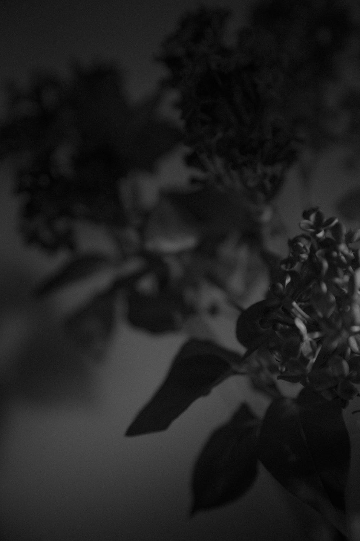 Black Lilac 8, 2017