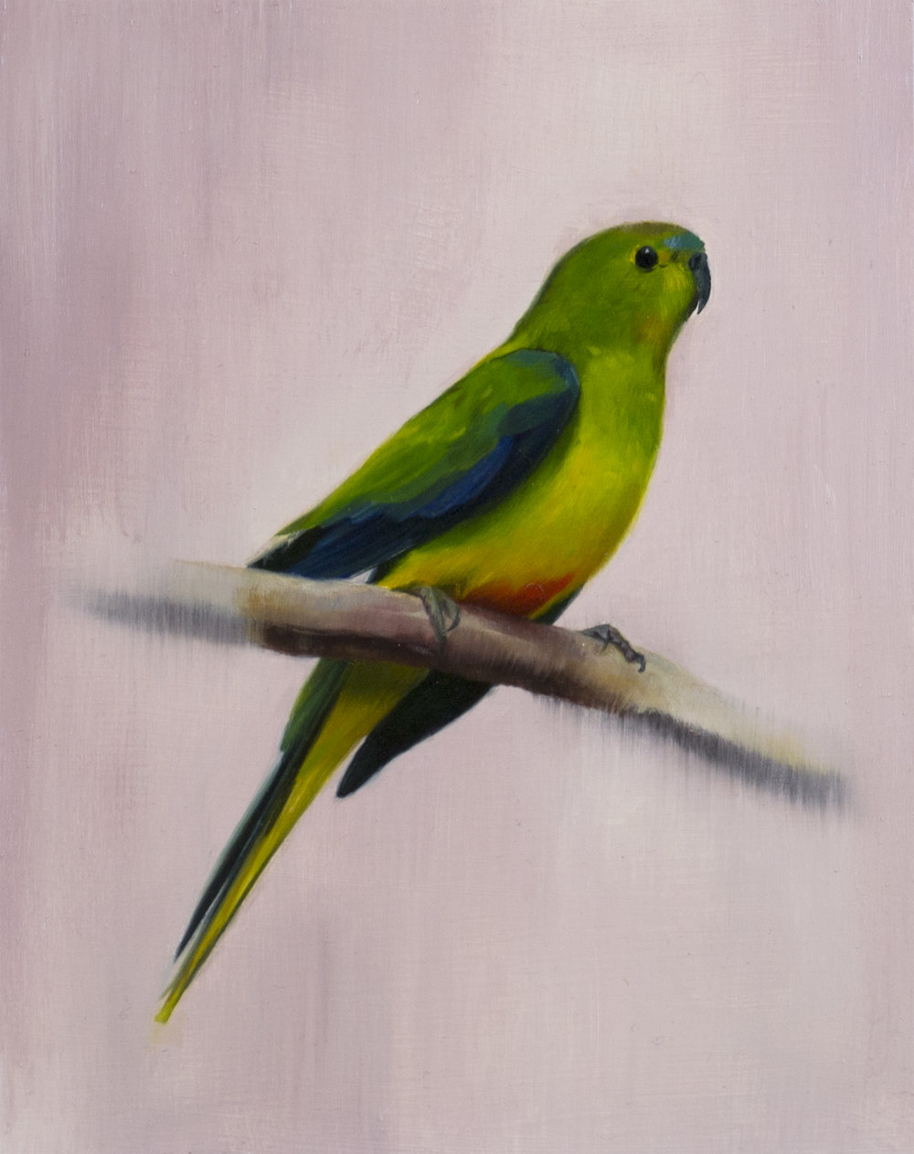 Orange Bellied Parrot by Brooke Walker.jpg