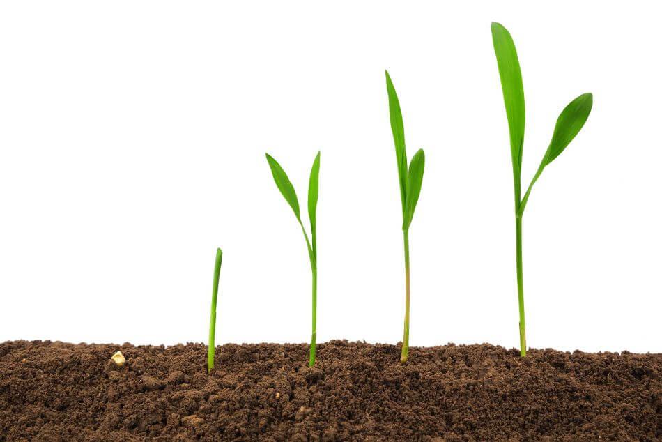 Crop Aid Soil