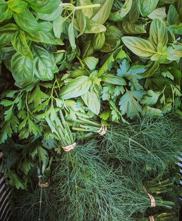 It's smelling mighty delicious over here #basil #dill #parsley #oregano #thyme #cilantro