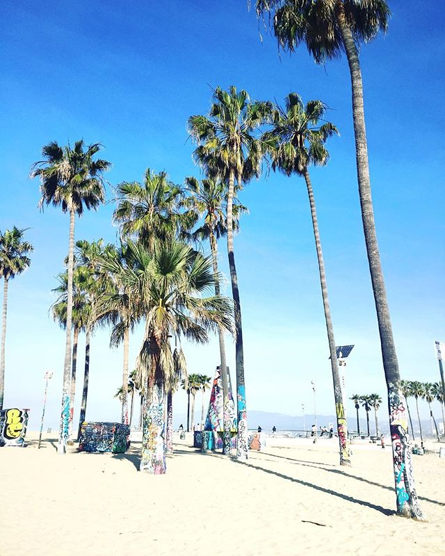 The palm trees in Venice were a great backdrop for our photoshoot with @lucki_starr and @the_bomb_digz 🙌🌴 We can't wait for you to see the pics! #LoveYourTribe #ShimmurFam