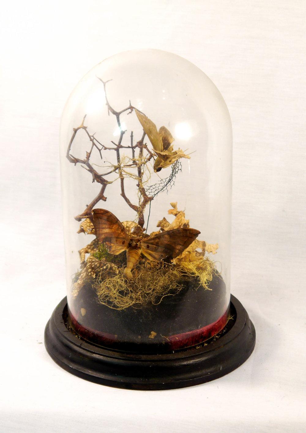 moth branches.jpg