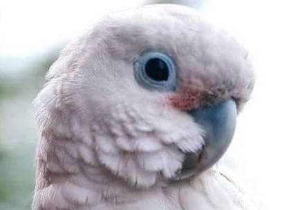 Parrot Advocacy & Education