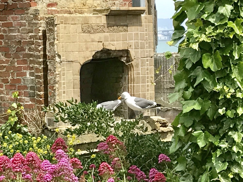 A family of seagulls now lives in the Warden's House.