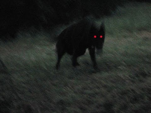 another-skinwalker-supernatural-video.jpg