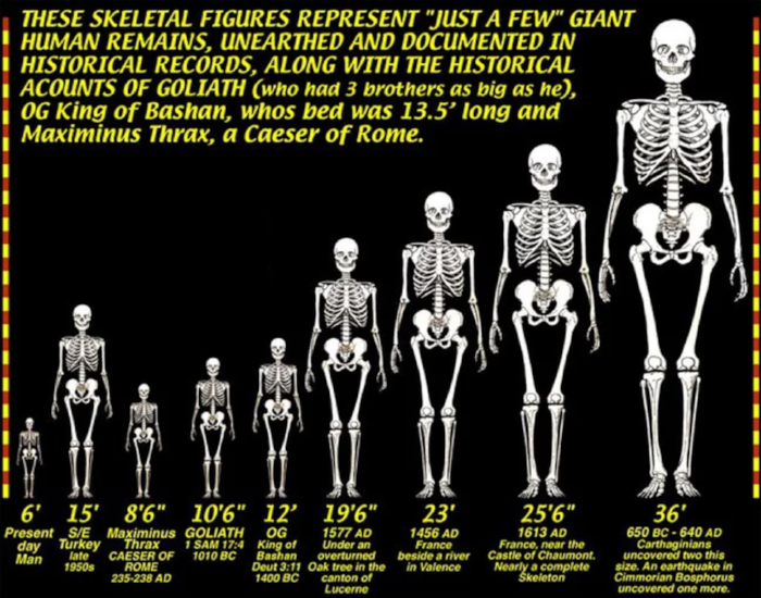 Comparing the sizes of giants from history and lore.