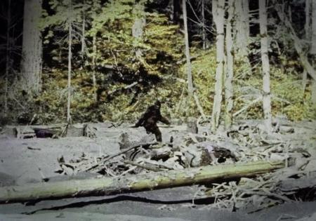 Still from the 1967 Patterson-Gimlin film.