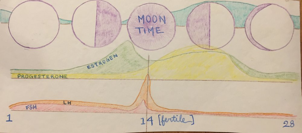 Hormones of the Moon cycle
