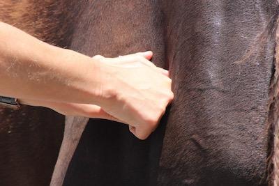 Equine Bodywork -