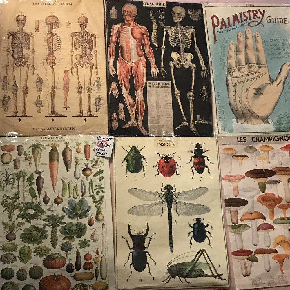 Sieni/anatomia 6€/kpl