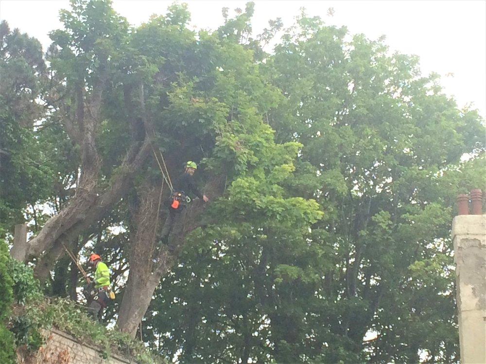 tree works folkestone (2).JPG