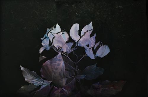 Genevieve_Chua_Black+Varieties+#5+Aruna.jpg