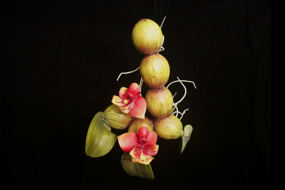 END18 Bulbophyllum Scabrum